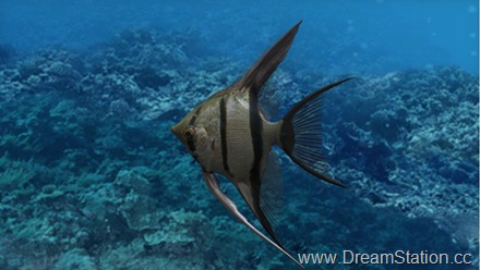 fish_growc_003_bmp_jpgcopy